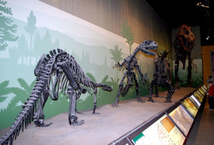 museo_storia_naturale3