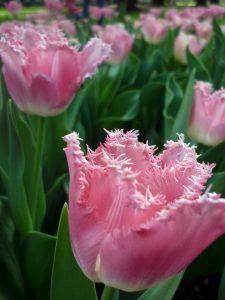 primavera in famiglia a milano e dintorni