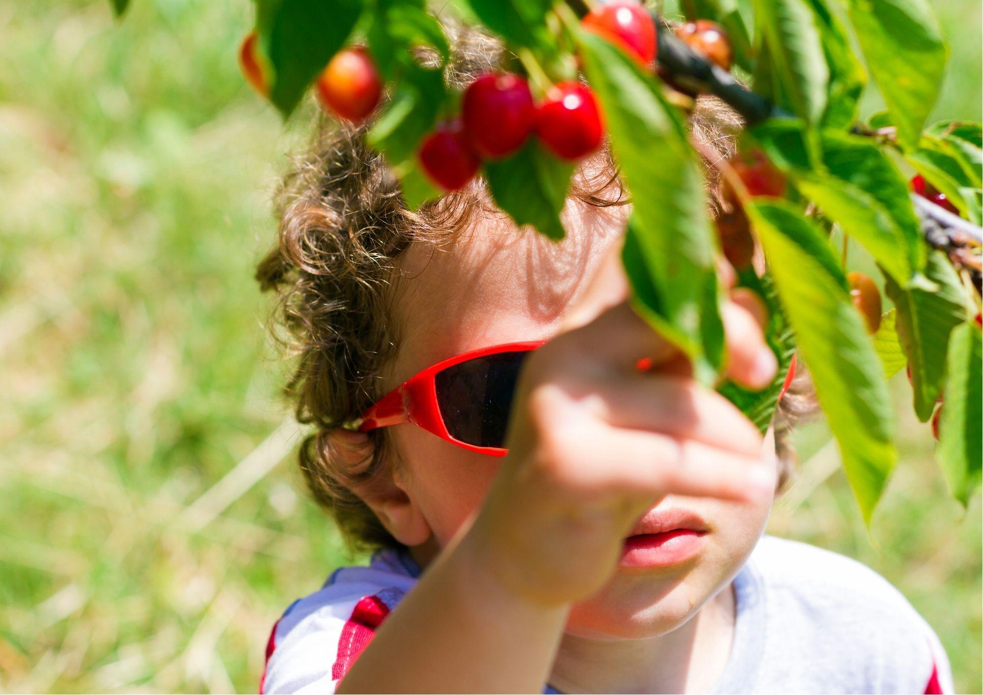 Trekking per famiglie nell'Oltrepò Pavese con raccolta ciliegie e merenda!