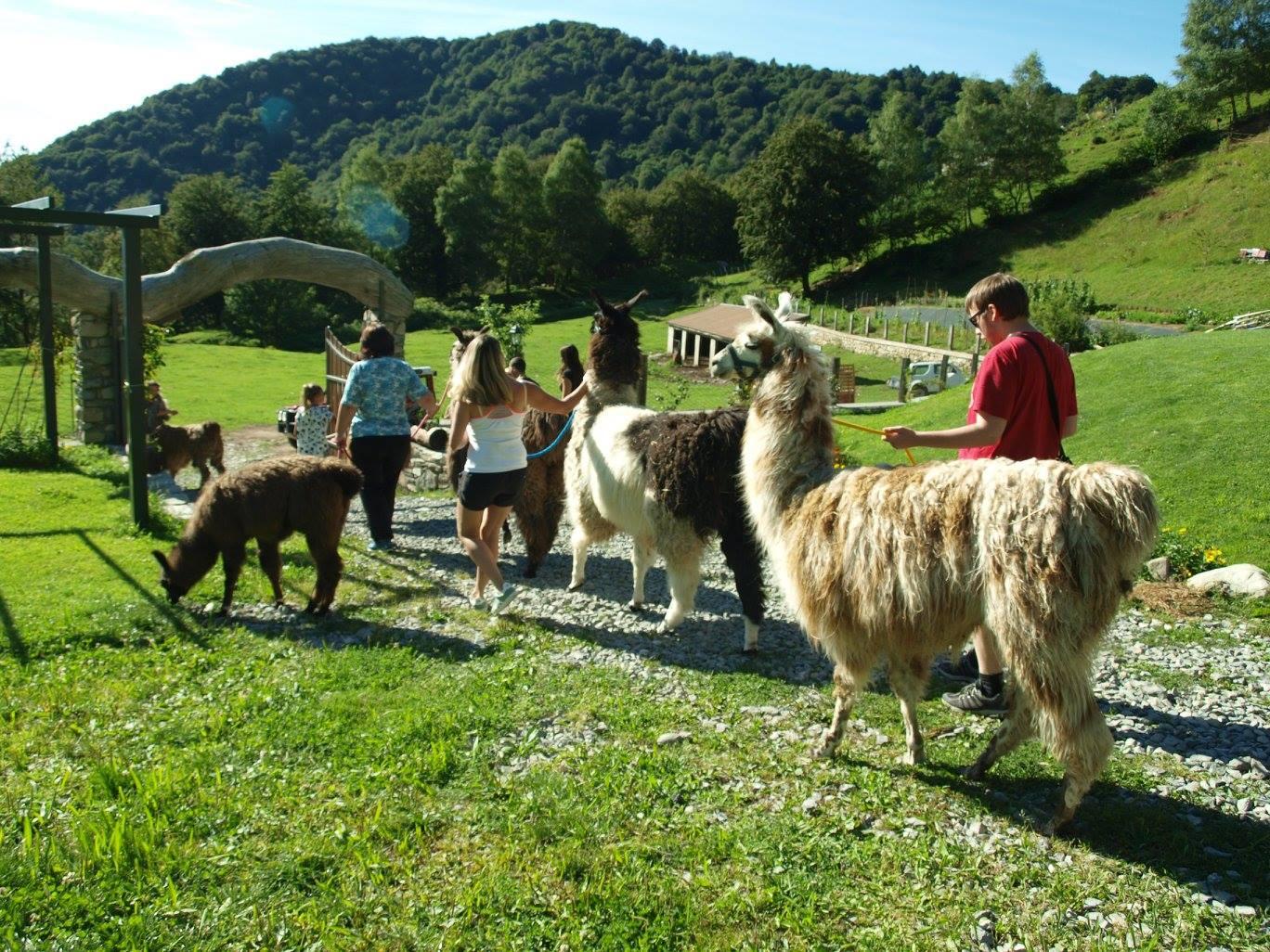 Passeggiata con i Lama e Pranzo in agriturismo